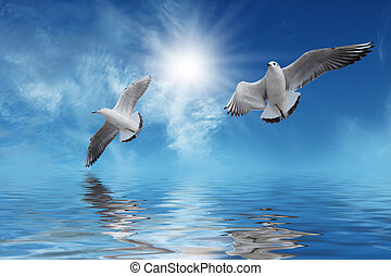 vliegen, wite zon, vogels