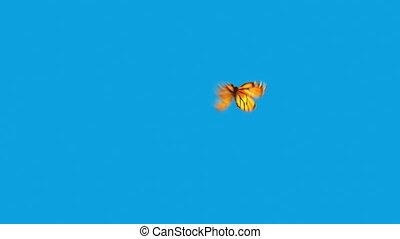 vlinder, blauwe , vliegen, achtergrond, sinaasappel