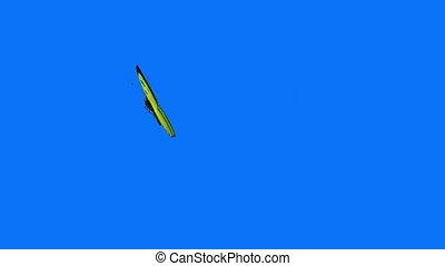 vlinder, blauwe , vliegen, groene achtergrond