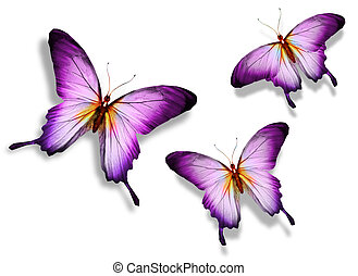 vlinder, drie, viooltje