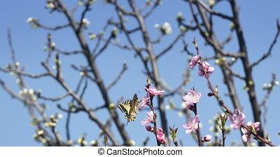 vlinder, lente, boompje, 4k