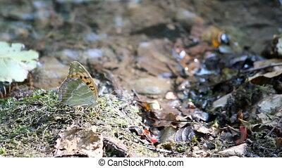 vlinder, spring scène