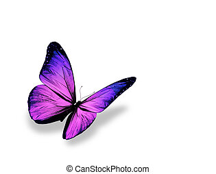 vlinder, vrijstaand, achtergrond, viooltje, witte