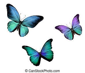 vlinder, vrijstaand, drie, achtergrond, witte
