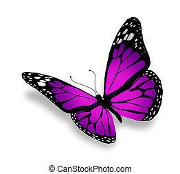 vlinder, witte , vrijstaand, achtergrond, viooltje