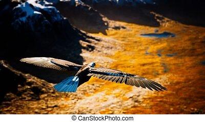 vlucht, amerikaanse adelaar, kaal, motie, alaskan bergen, vertragen, op