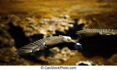 vlucht, bergen, adelaar, amerikaan, motie, op, kaal, vertragen, alaskan