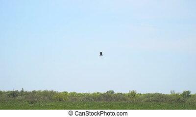 vlucht, herons