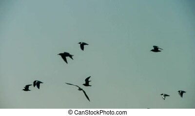 vlucht, silhouette, vogels, flying.