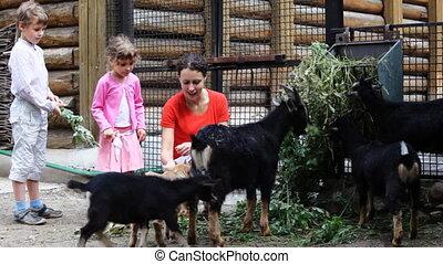 voederen, dorp, jonge kinderen, moeder, geiten