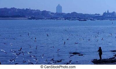 voederen, vrouw, seagulls, strand