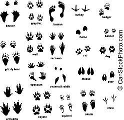 voetspooren, dier