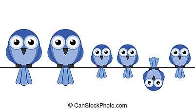 vogel, gezin