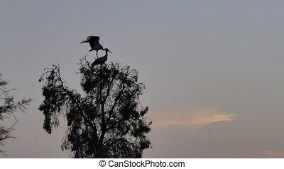 vogel, ooievaar, achtergrond, boompje