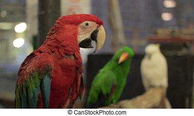 vogel, papegaai