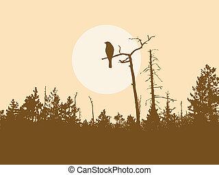 vogel, silhouette, boompje