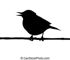 vogel, tak, vector, silhouette