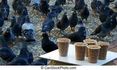 vogel, voedingsmiddelen, duiven