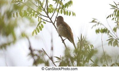vogel, zingt, lente, lied, beautifully