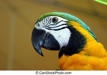 vogels, #1