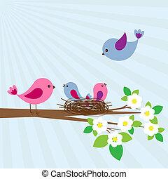 vogels, gezin