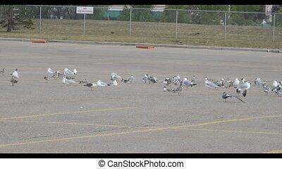 vogels, migreren, partij, parkeren, stad, vlucht