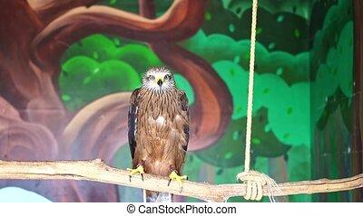 vogels, vlieger, prooi, zit, captivity., zoo., voliere