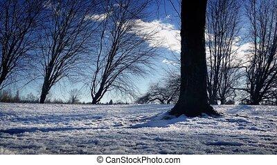 voorbijgaand, blote, sneeuw, bomen