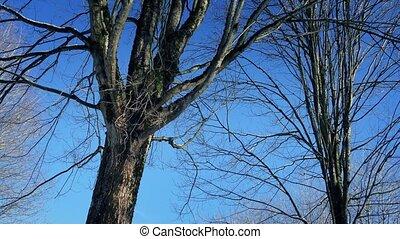 voorbijgaand, blote, winter bomen