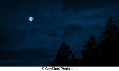 voorbijgaand, hemel, boven, bomen, nacht