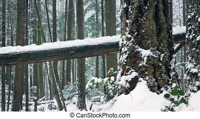 voorbijgaand, sneeuw, bomen, begraven