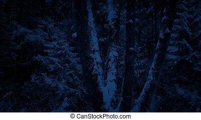 voorbijgaand, snowstorm, bomen, nacht