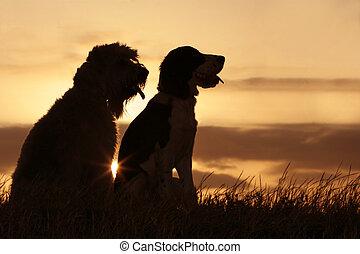vrienden, ondergaande zon