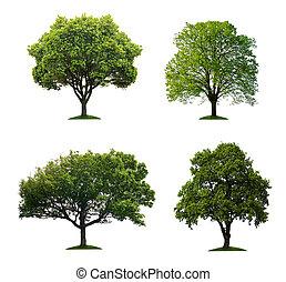 vrijstaand, bomen