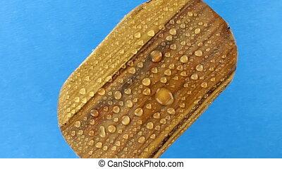 vrijstaand, bovenzijde, oud, houten, aanzicht, omwenteling, ovaal, raindrops., plank