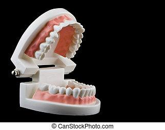 vrijstaand, op, zwarte achtergrond, teeth, afsluiten