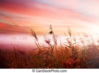 vroeg, nevelig, mist, landschap., morgen