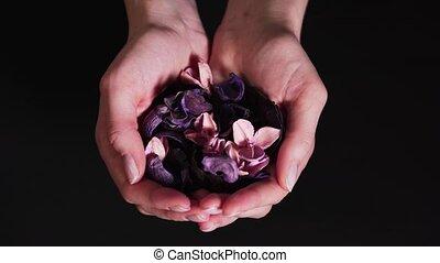 vrouwen, bloemen, achtergrond., handen, aromatherapy, droog, natuurlijke , tonen, black , welzijn, kalm, palms., concept, ingredienten