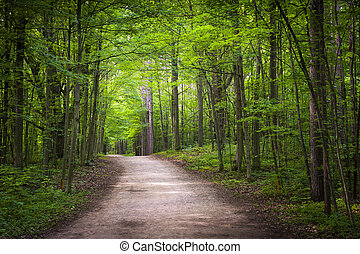 wandelende, bos, groene, spoor