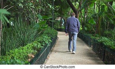 wandelende, man, omringde, steegjes, bomen, park