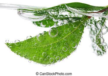 water, bladeren, groene