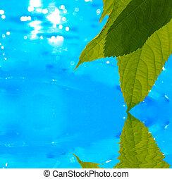 water, bladeren, weerspiegelen