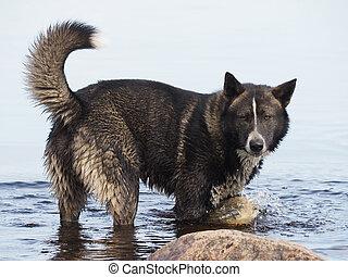 water, dog