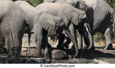 water, drinkt, afrikaanse olifanten