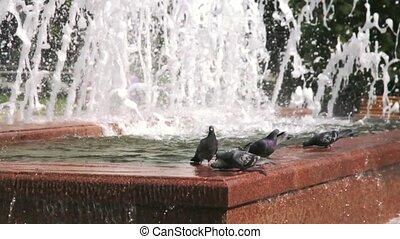 water, duiven, fontijn, drinkt