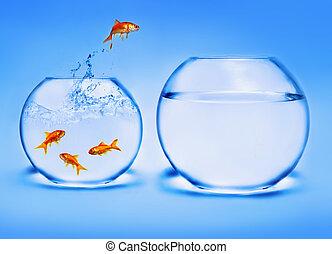 water, goudvis, springt, uit