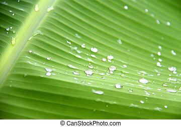 water, groene, druppels, blad, achtergrond