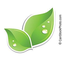 water, groene, vector, blad, droplets.