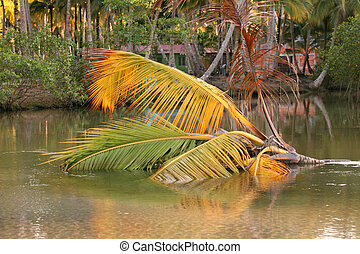 water, kokospalm