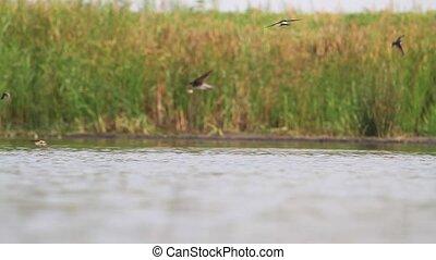 water, op, vogels, meer, vlucht, drank, vlieg